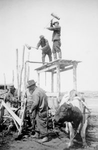 On the shore of the river, two men standing on wooden scaffolding drawn by an ox drive stakes into the ground with a sledge hammer. Three other men prepare chains in the foreground.
