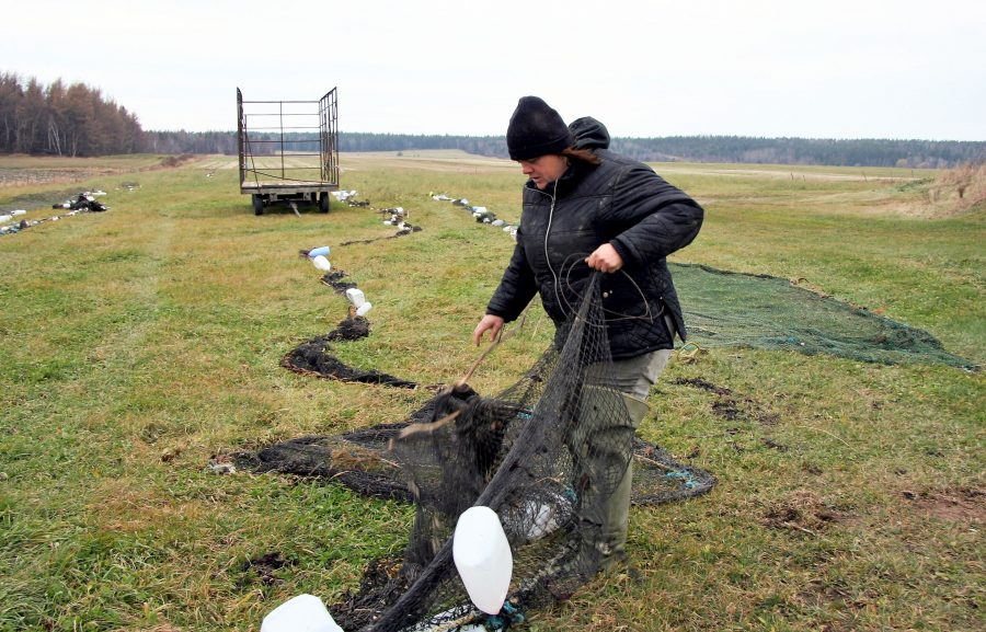 A women unrolls a fishing net in a field. Other nets are spread out on the ground. An empty hay trailer can be seen in the middle of the photograph and a forest in the background.