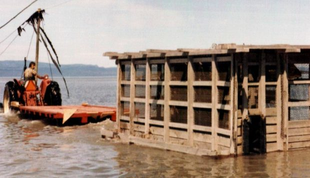 A huge rectangular trap with a wooden frame and covered with wire mesh is towed along the shore of the river on a tractor-drawn trailer.