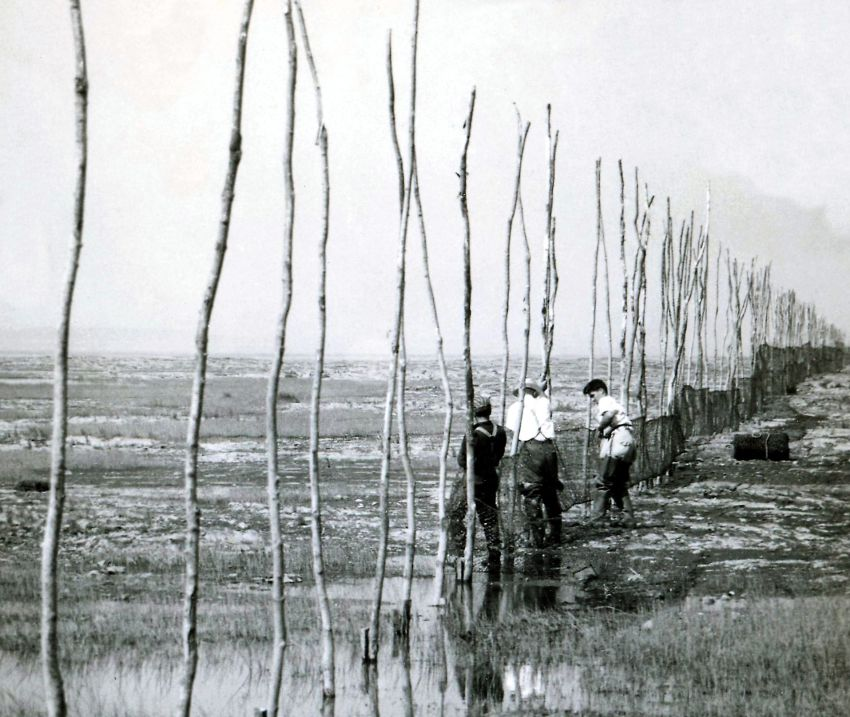 Three men attach fishing nets to the bottom part of a row of long poles on the shore of the river. Black and white photograph.