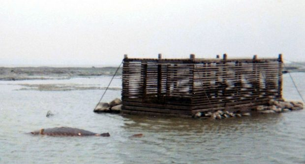 Wooden trap made of narrow horizontal planks. It measures 2.4 m wide by 4.8 m long and 1.8 m high. It is anchored to the sea floor by cables and reinforced by large stones at the base.