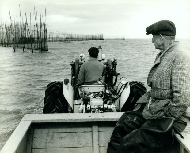 A man drives a tractor into the river as he heads toward an eel weir. The water is quite deep. Another, somewhat older man is a sitting in the tractor's trailer. He is wearing fishing boots and a checkered jacket that is held closed by a piece of rope that acts as a belt. Black and white photograph.