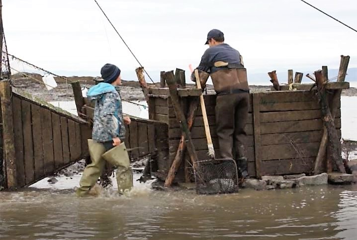 A man dressed in boot-foot waders and a child wearing fishing boots. The man is about to open a wooden box that is used to hold eels captive in a weir. The child is walking towards the man.