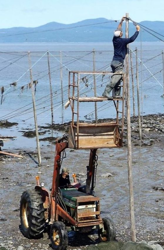 A tractor lifts special scaffolding in its bucket on the shore of the river. A man stands on the scaffolding as he attaches a cable to the top of a post. The river can be seen in the background.