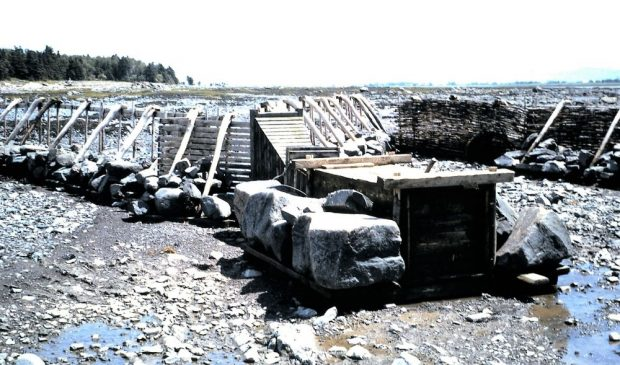 A long row of slatted panels placed side by side stand on the shore of the river at low tide. Some are covered with branches and form a barrier. The panels are held in place by large rocks placed at their base.