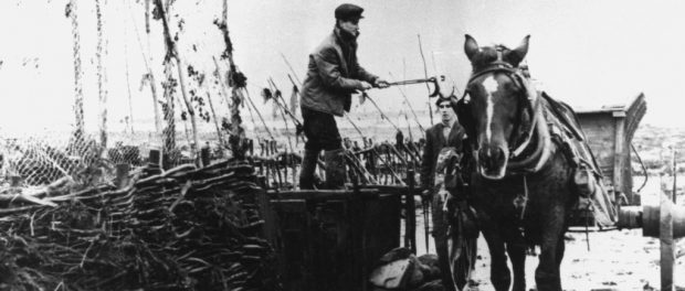 A man standing in a large wooden collecting box beside an eel weir holds an eel above a horse-drawn trailer, using long-handled tongs. Black and white photograph.