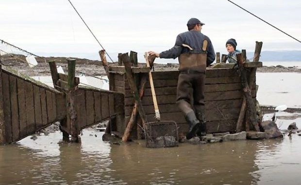 On the shore of the river, a fisher and a young boy get ready to open a wooden box in which eels are held captive. Two wooden funnels set end-to-end are connected to the box and guide eels into it.