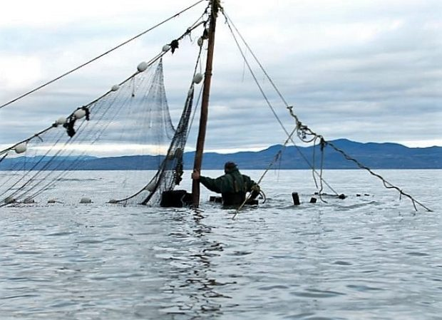 A man, up to his waist in water and with his back to the photographer, holds onto a post to which a fishing net is attached.