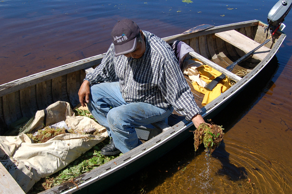 Colour photo, a man sitting in a boat, soaking a piece of moss in the water. A white tarp on the floor of the boat serves as a preservation bag. The moss will help keep the fish fresh.