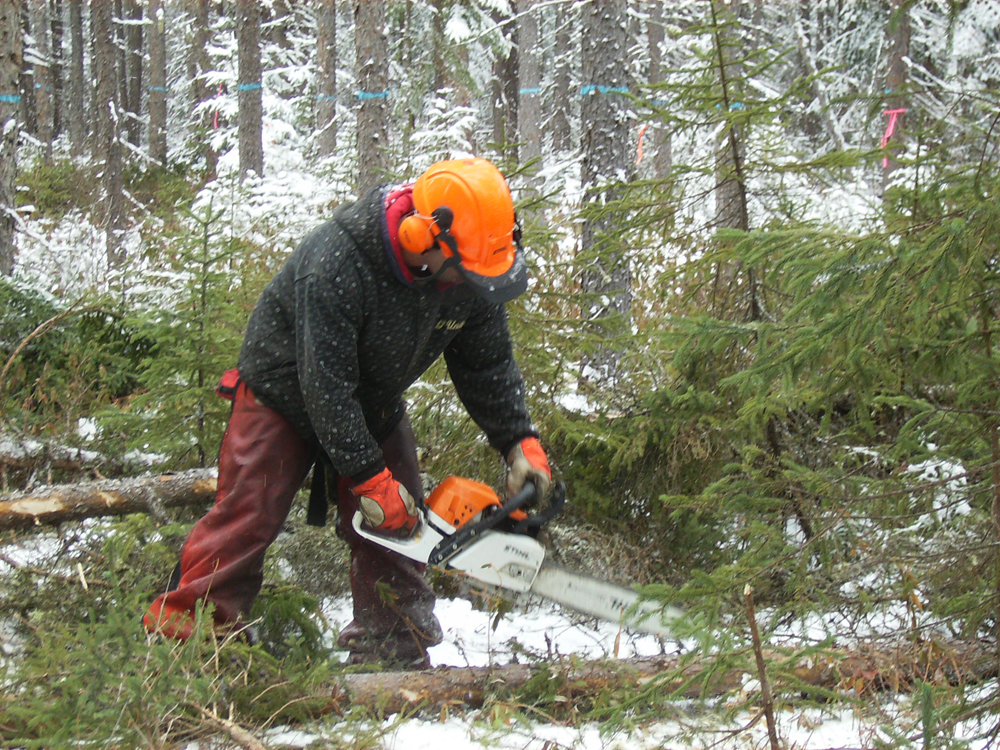 Colour photo, a man holding a saw, chopping a tree in order to make firewood.