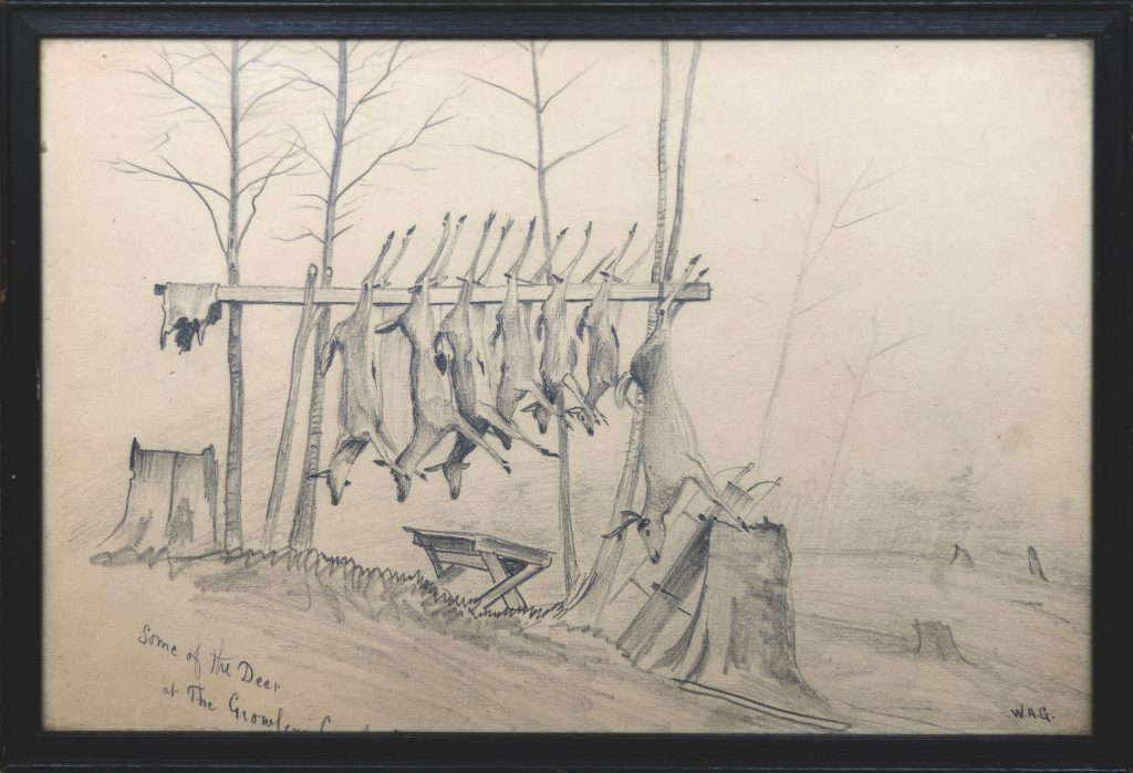 Seven deer hanging on a horizontal pole with stumps in the foreground.
