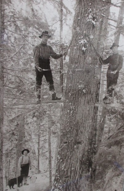 O LOGGING......high up on their SPRINGBOARDS Cutting tree Fellers Set with saw