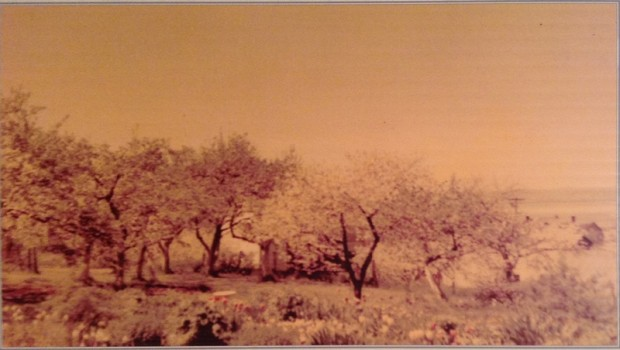 The orchard of Manoir Fraser at the beginning of the 1960s. The orchard, at the back of the property, contains many apple, plum, and cherry trees.