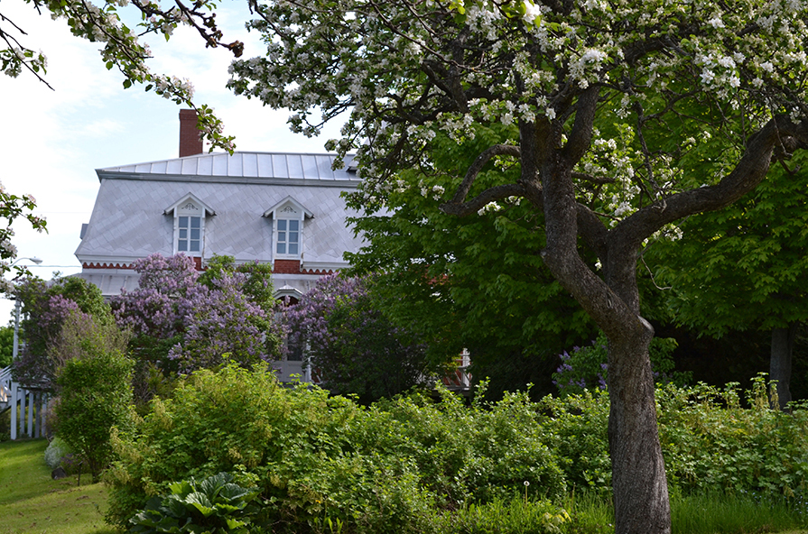 Colour photograph of lilac bushes and fruit trees in bloom. A brick house is in the background.