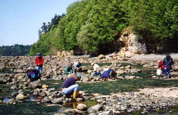 A group of people scattered across a sunny Southern Vancouver Island beach.