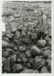 A girl in a windbreaker standing on a boulder-covered beach, pointing down at a spot in front of her where the rocks have been cleared away.