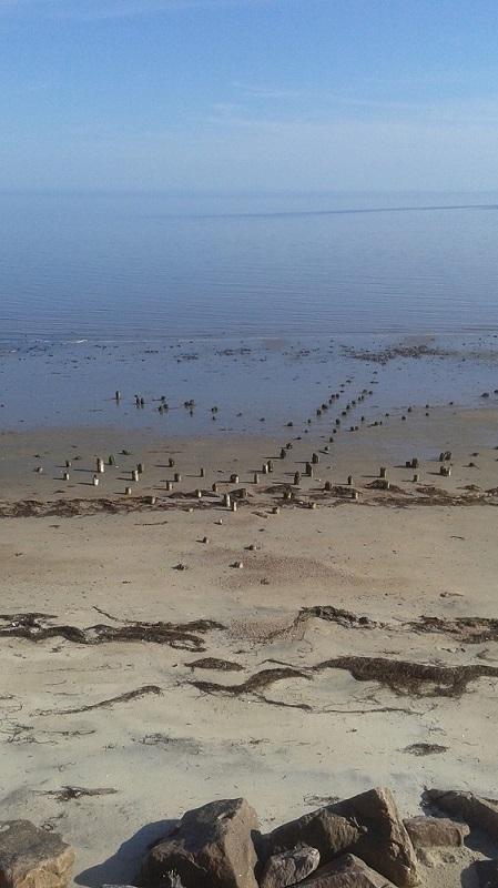 Plage à marée basse avec différents morceaux de bois