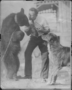 Black and white archival photo of Alvin Baker with a bear and a dog. On the left of the photo, the bear is wearing a chain around its neck and is standing on its hind legs.