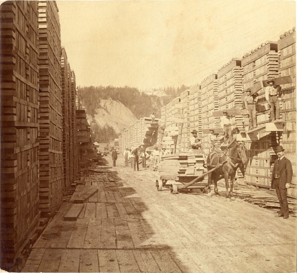 Sepia archival photos showing stacks of timber several metres high, forming a long corridor bustling with activity. Some of the workers are busy transferring planks from a horse-drawn cart to the top of one of the piles. In the forefront, on the right, a man in a suit and tie is looking at the camera.