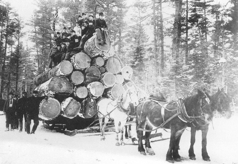 Four horses pull a load of enormous tree trunks where twenty people are sitting.