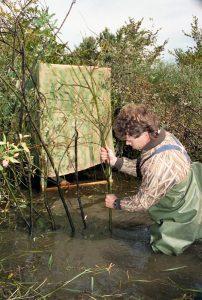 Un chasseur ayant de l'eau jusqu'au cuisse enfonce des petits arbres sur les berges d'une rivière. Il tente de camoufler une cache faite de toile.