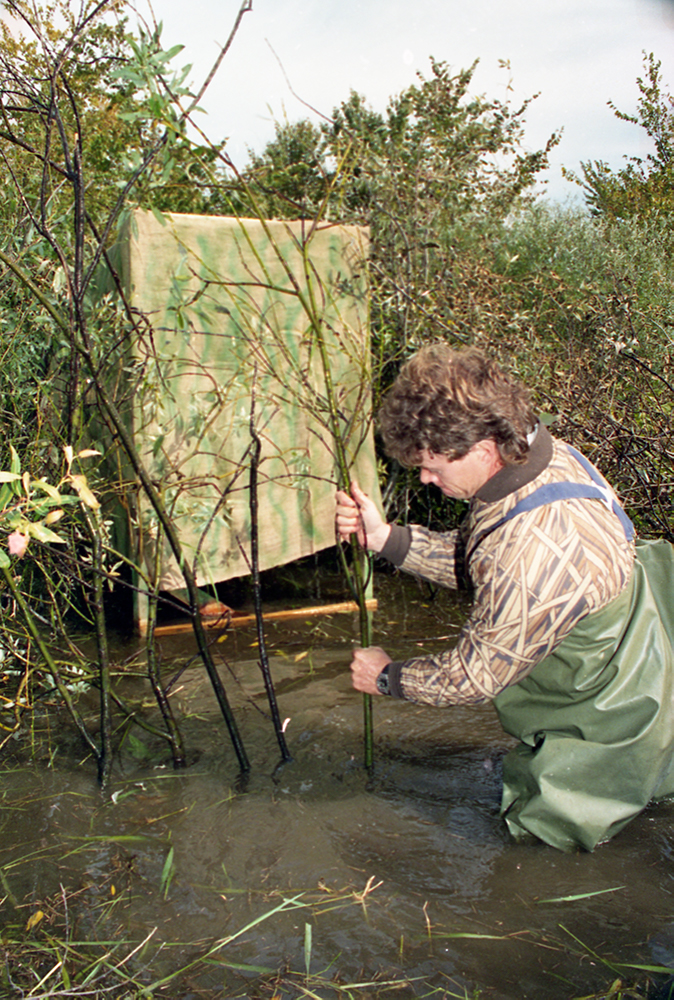 A hunter with water up to his thighs drives small trees into the banks of a river. He's trying to camouflage a blind made of canvas.
