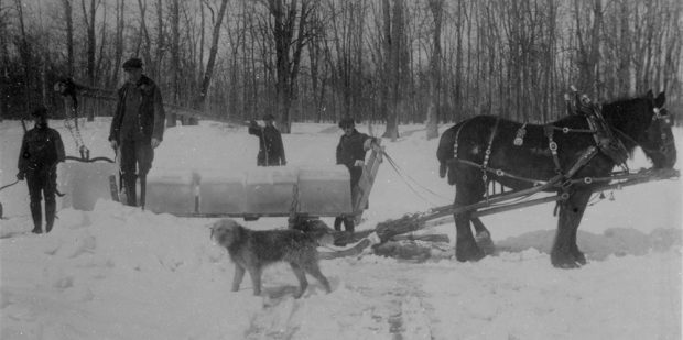 Black and white photograph of four men on an ice- and snow-covered river cutting and loading blocks of ice onto a sled pulled by a horse. A dog is in the foreground.