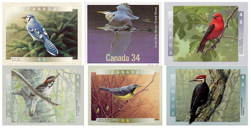 Montage de 6 timbres canadiens illustrant certains oiseaux de nos forêts.