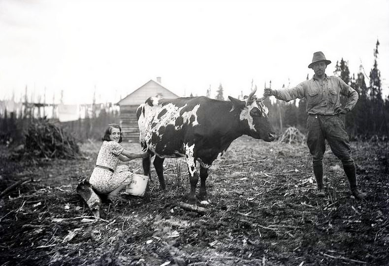 Black and white photograph of a woman milking a cow while a man holds the animal by a horn. In the background, a log cabin.