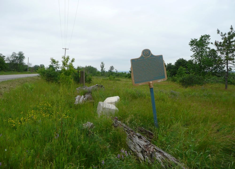 A metal plaque at the side of the road stands in tall grass near decaying logs.