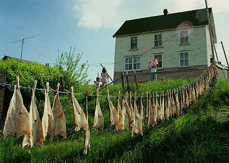 Cod fish hung out to dry In the background a white wooden house. A woman is hanging laundry and two children, holding hands, watch her. - Salines et remises à Parker's Cove.