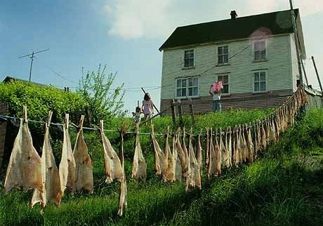 Cod fish hung out to dry In the background a white wooden house. A woman is hanging laundry and two children, holding hands, watch her.Salines et remises à Parker's Cove.