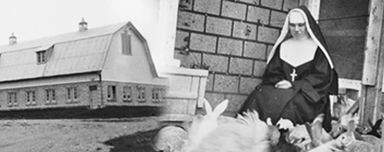 Greyish photo of a building/Black and white photo of a nun surrounded by rabbits.
